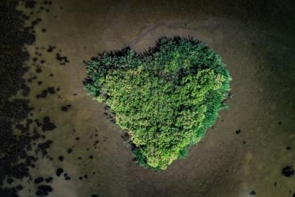 Coeur de Camargue